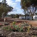 Goomalling Caravan Park's water wise garden