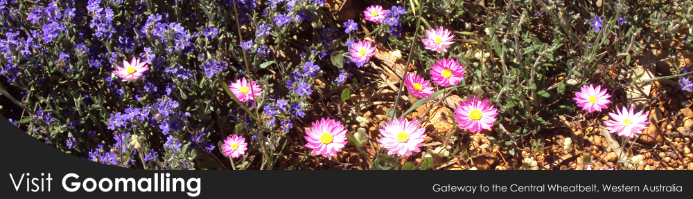 Visit Goomalling during the wildflower season from July to September