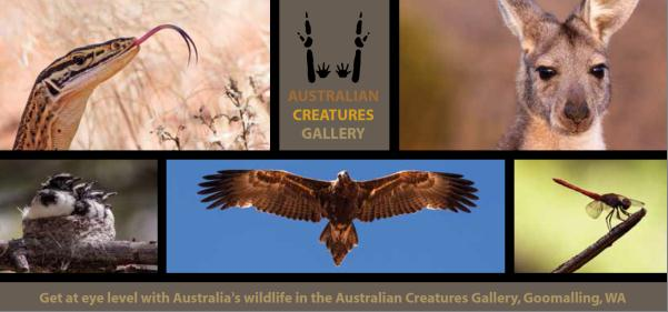 Australian Creatures Art Gallery at Slater Homestead, Goomalling WA, from 3 May 2013