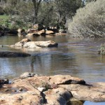 Mortlock River in Goomalling, Western Australia