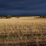 Stormy summer sky after harvest, Goomalling, Western Australia