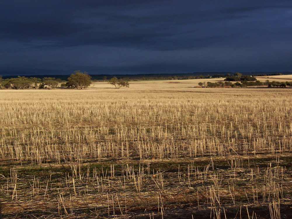 Stormy summer sky after harvest, Goomalling, Western Australia