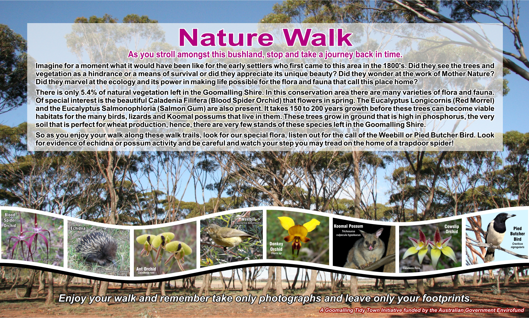 Nature Walk information sign at Salmon Gum Way, Goomalling WA