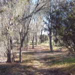 Bushland in Goomalling, Western Australia
