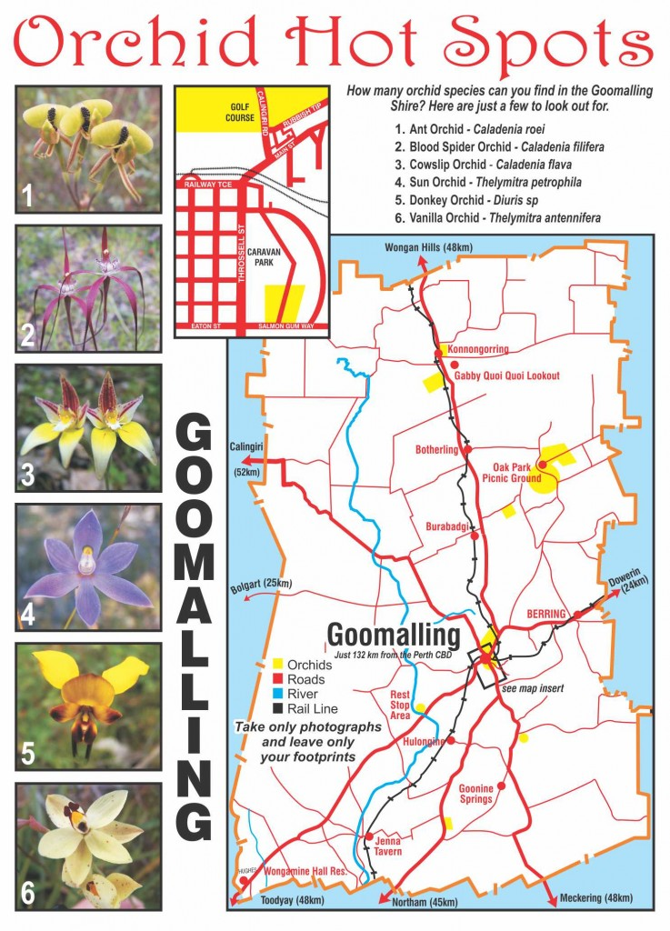 Orchid hotspot guide: a map of where to find beautiful native orchids in Goomalling, Western Australia, and pictures of some orchids to look for