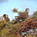 Birds in Goomalling, Western Australia